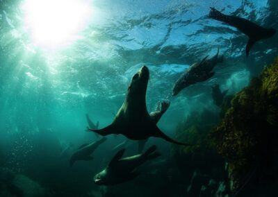 Seals at Narooma. Underwater Tour Awards. Imagery by Jasmine Carey ©2020